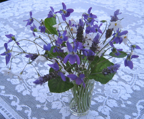 Violets, potato vine and lavender.