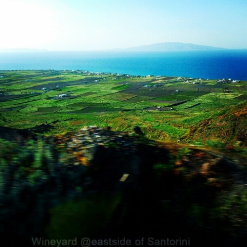 #vineyard #santorini  #nature  #view #island  #travel  #clubsocial  #picoftheday  #spain  #espana  #landscape  #green #instagram  #instagrammers  #instabest  #bestoftheday #followme  (Taken with Instagram)
