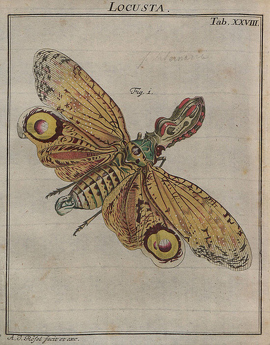 atelierentomologica:  From  'Insecten-Belustigung' (Insect Amusements) by AJ Rösel von Rosenhof. The books were released in installments between 1746 and 1761.
