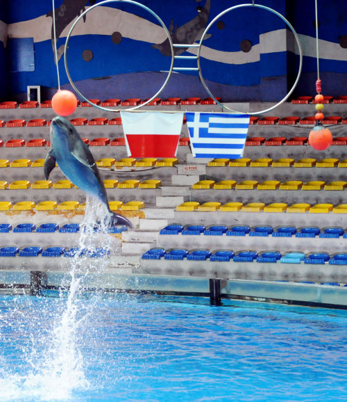 Dolphin Ya Ya jumps to nod the ball of Poland to predict a win for them in the match against Greece.  uefa-euro2012: