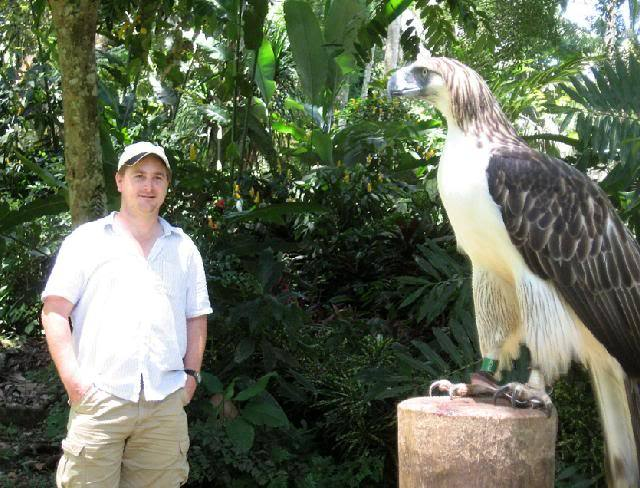 The Philippine eagle (Pithecophaga jefferyi) is one of the two largest eagles in the world. It ranks second to the Harpy eagle of Central and South America, but only in regards to weight (averaging 8.0 kgs. vs. 9.0 kgs) and smaller feet and legs. It is undoubtedly the tallest, and holds the world record for wingspan in any eagle … it can exceed eight feet.  Every breeding season is filled with hope that at least one eaglet will be added to the tiny population. The International Union for the Conservation of Nature believes that between 180 and 500 Philippine Eagles survive in the Philippines.  Also known as the Monkey-Eating Eagle, because it's diet consist of eating Monkeys, Lemurs, Wild Boars, Large Snakes, and anything big it can get it's talons on.