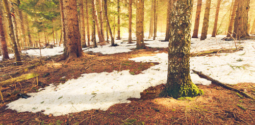 Bosques calidos by -JVLM- on Flickr.