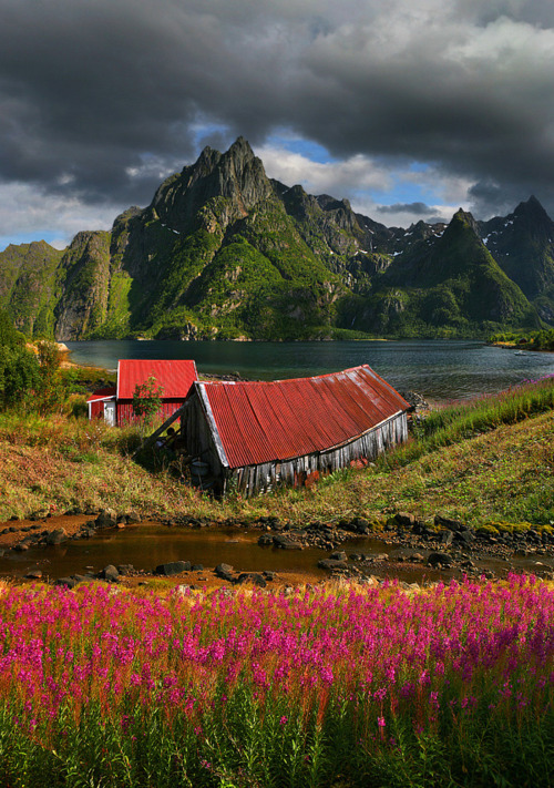 Summer Fjord, Svolaer, Norway photo via ouur