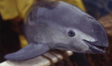 Vaquita CI New Mexico