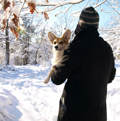 corgiaddict:  You know your dog is spoiled when he gets carried because his toes are frozen…