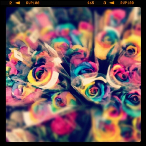 Flowers #rainbow# in love (Taken with Instagram)