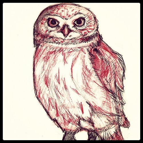 Owl Sketch #sketch #pencildrawing #cute #illustration #drawing #art #bird #owl  (Taken with Instagram)