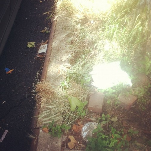 #dailydetritus End of the Week Edition (Taken with Instagram)
