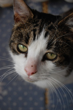 I took this photograph of my cat Tiggy. Sadly he is no longer with us , but will always be loved.