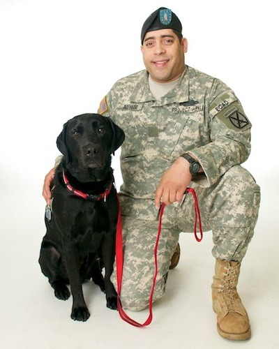 "dogblessusa:  Meet Ace, a U.S. Retired Army Infantry soldier, who was called to duty at the age of 28 in the fight against terrorism. Josue ""Ace"" Acevedo served in Iraq as an infantryman and gunner. Front line, ready for action, protect America, save lives – that's ACE. Ace proudly served his country for five years, but after being forced to retire, he was left with scars from which he thought he would never recover. It was a tragic day in battle for Ace when his shoulder and back were severely injured in a Hum-V accident. Ace now lives with a severe spinal cord injury and the invisible wounds of Traumatic Brain Injury (TBI) and PTSD. ""It was Blip that brought me to ECAD, but Aries gives me purpose again,"" Ace said with a smile on his face. Visiting the VA in the Bronx, Ace was discovered by Blip, our resident golden retriever Therapy Dog who has a gift for zeroing in on the person in need of a little extra love and support. Today, Aries' proudly serves Ace with leash in mouth standing at the door, telling Ace it is time for them to go out. This specially educated dog reminds Ace to take his medications, which are at significantly lower dosages now. Aries helps to reduce Ace's back and shoulder pain by picking up dropped objects. In fact, Ace and Aries are on the go all the time now, as good-will ambassadors for ECAD and Project HEAL, as well as advocates for other veterans who are in need of help."
