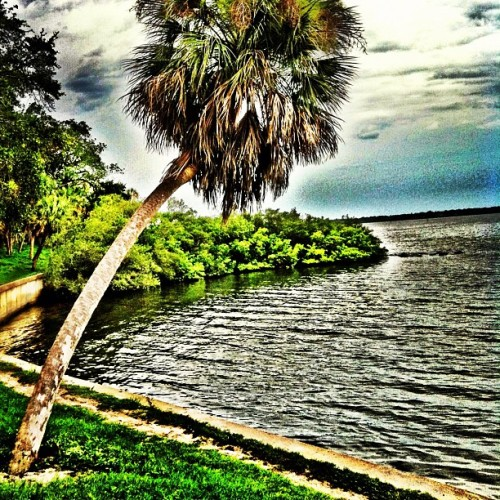 #tree #tampabay #pretty #palmtree #water #iphone #florida #iphonesia #ikonic  (Taken with Instagram)