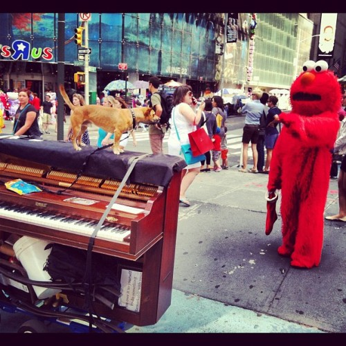 pianoacrossnyc:  Brando was really scared of Elmo. He was ready to attack. Elmo was also being a little obnoxious. (Taken with Instagram at Piano across america times square)  I always told people that Elmo on 44th was edgy.
