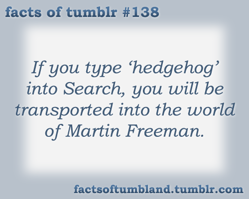 If you type 'hedgehog' into Search, you will be transported into the world of Martin Freeman. submitted by Anon