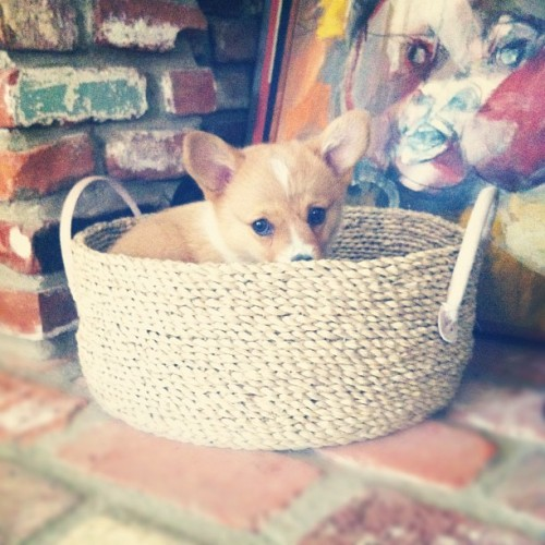 She found the toy basket! (Taken with Instagram)