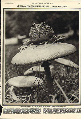 "GIANT FROG SITTING ON TOAD STOOL, via EBAY  UNUSUAL PHOTOGRAPHS — NO. 275: ""WHO ARE YOU?"""