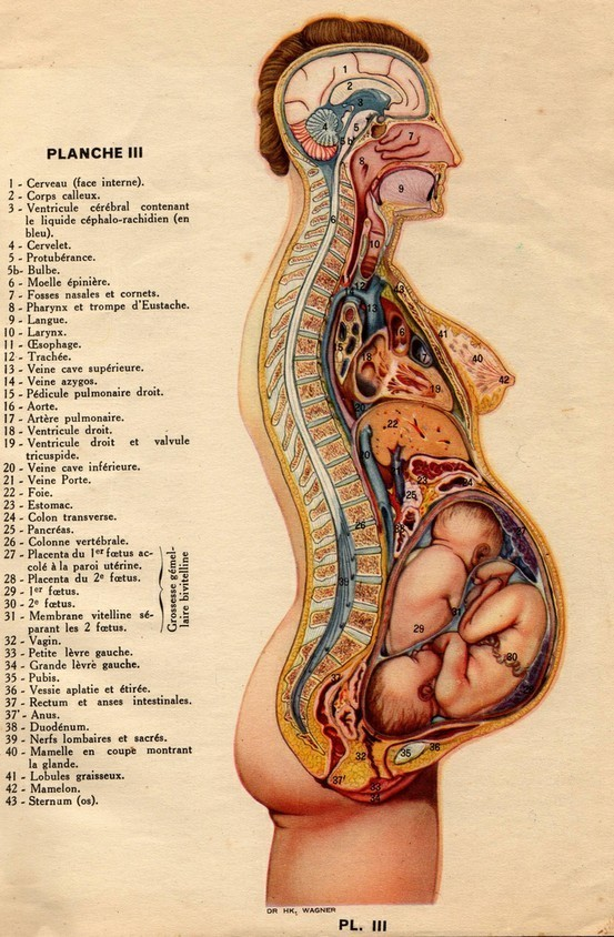 Source: http://bibigreycat.blogspot.co.uk/2007/11/anatomie-la-femme-1937.html