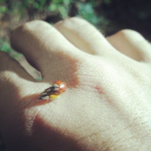 Fuckin bugs on me. ….. bugs fucking on me. (Taken with Instagram)