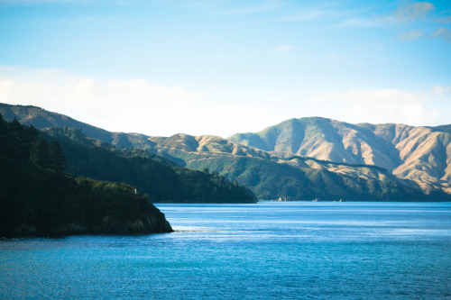Took the ferry from Picton to Wellington. Wow.