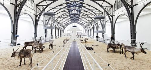Soma by Carsten Höller An artwork on display at the Hamburger Bahnhof. The reindeers have been fed fly agaric mushrooms, which makes their urine hallucinogenic. The urine is then collected by handlers and stored in fridges available for people to sample the contents.