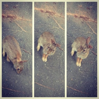 My bunny obsession (Taken with Instagram)