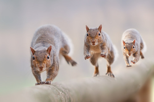 llbwwb:  Follow me! by Stefano Ronchi. It's time for Animal Hour :)