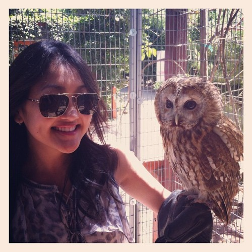 OWL!!! BEST. DAY. EVER.  (Taken with Instagram)