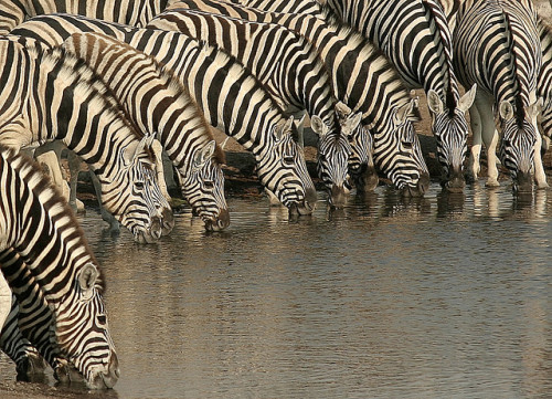 planetofbeauty:  Stripe convention by ..jmd.. on Flickr.