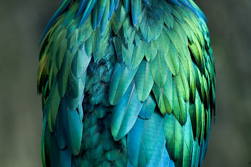 pleochroisms:  Beautiful Bird by  rjswilson on Flickr.