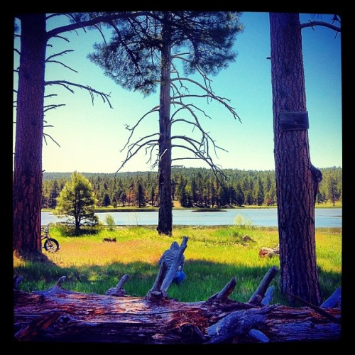 #flagstaff #weekend #vacation #lake #beautiful #green #blue #sky #trees #forrest  (Taken with Instagram at Munds Park, AZ)