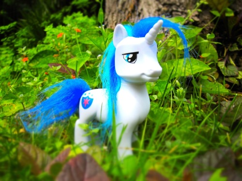 ponyoftheday:  Pony of the Day FIRST GIVEAWAY! Hi everyone! I have recently hit the 500 mark followers and i wanna celebrate this happy occasion offering my first giveaway^_^ You can win the lovely and still unreleased Shining Armor you see in the picture above. You just have to reblog this entry (and if you like you can start follow me, but it's not requested), and on sunday 17th i will use random.org to choose the winner^_^ During this week, you will be able to reblog this post only once a day (if you want). I will ship everywhere in the world, but please remember to open your ask box and answer within 24 hours, or i will have to choose another winner^_^ Thank you so much and good luck everyone!