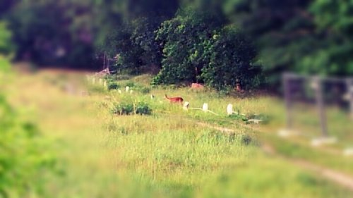 Ein Reh / A Deer#deholger #foto #natur #(from @deHolger on Streamzoo)