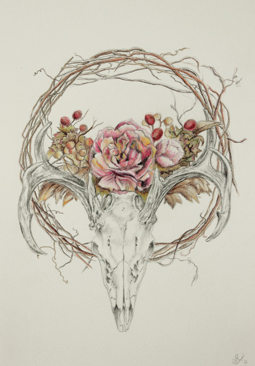 nancyv-art:  Deerflowering graphite, color pencils
