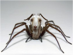 THE OWs AND EWs OF SCIENCE: Your Friendly Neighbor, The Amazing Spider-Goat!  (Source: BBC, Playing God)
