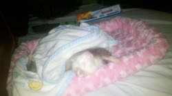 This is my ferret, Bindi :)
