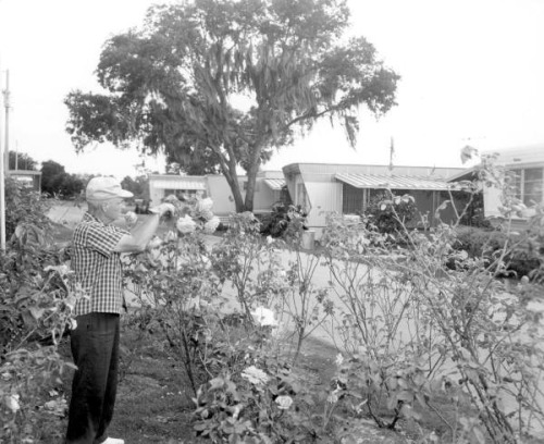 Mr. Paul E. Linthieum tends to the garden near the trailers: Fort Lauderdale, Florida by State Library and Archives of Florida on Flickr.Look at the photo. Consider what has has just happened here, or what is about to happen here. Who has been here? Who will come here and and what will they do? What kinds of interactions can you imagine? Write one leaf about these or other things that occur to you upon looking at the picture. Do not allow yourself to be limited by what you see. Go.| Write One Leaf + about + ask + random + facebook + twitter | sponsors + You Are a Dog [ Kindle | Google | iBookstore ]