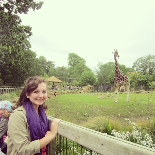 Giraffes at the Dublin zoo! #ireland #studyabroad (Taken with Instagram)