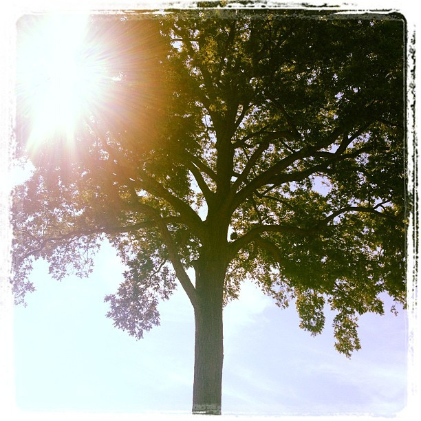 Tree at mt Vernon  (Taken with Instagram)