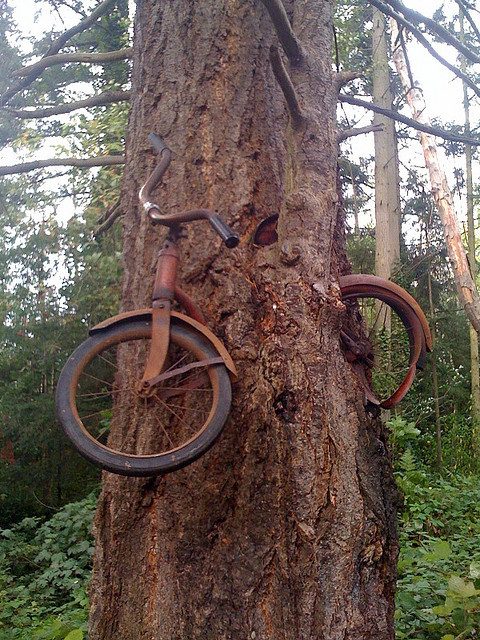 slolane:  Bike in a Tree by cellissimo on Flickr.