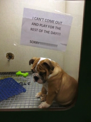 Aww poor puppy