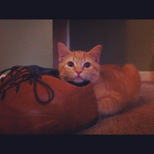 My shoe makes a good pillow.  (Taken with Instagram)