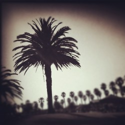 backlit #palm #tree and #sky (Taken with Instagram)