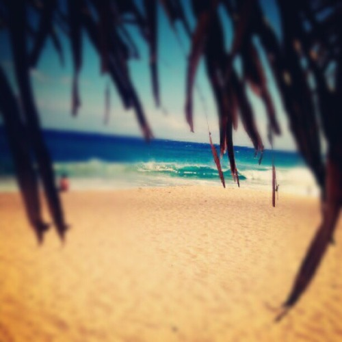 \HI/ #sandys #instagramhi #hiig #alohasaturday (Taken with Instagram at Sandy Beach Park)
