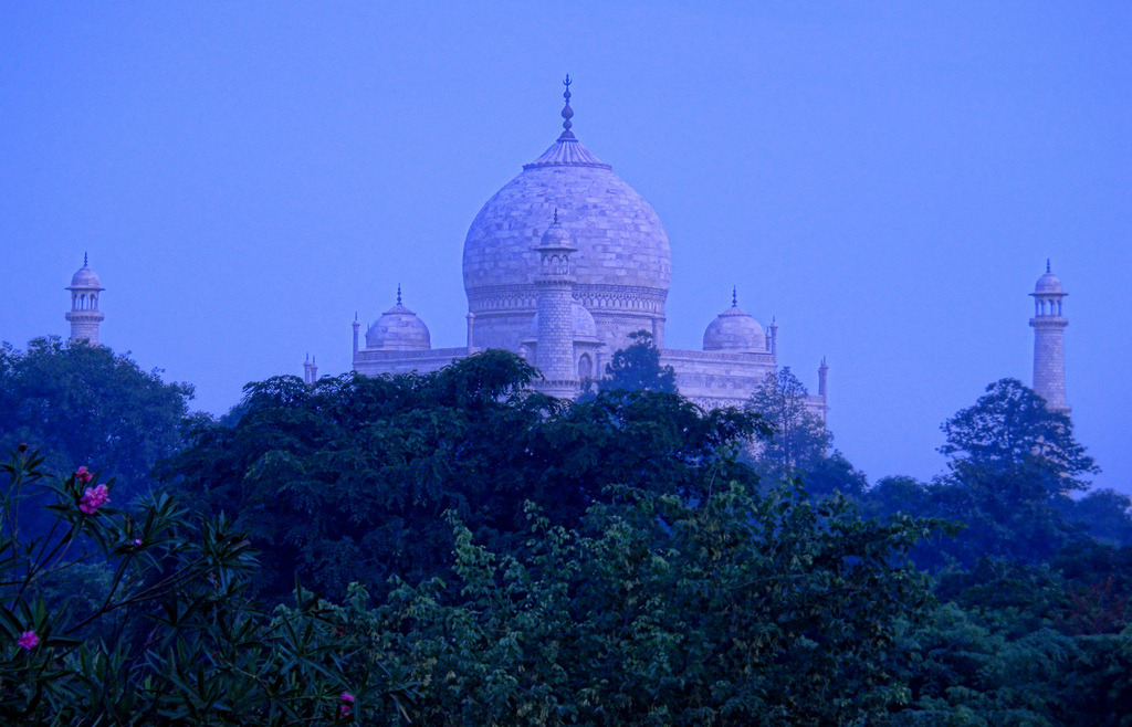 The stunning Taj Mahal rises in the early morning mists amongst rhododendrons and jungle at first light in Agra, Uttar Pradesh, India