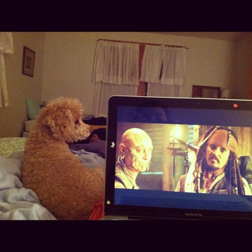 Puppy + Pirates = Perfect #summer #nantucket #movie #piratesofthecaribbean #johnnydepp #unf #night (Taken with Instagram)