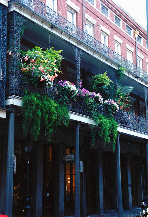 efilina:  Violet's, Chartres St.  Balcony above Violets'808 Chartres St.New Orleans LA