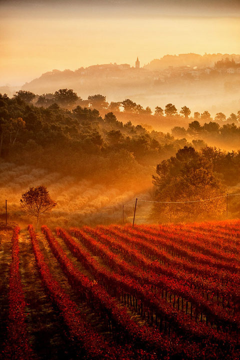 thebookenchantress:  Fog over grapeyards in Castel Ritaldi, Umbria, Italy. enchantedeccentricity: Isn't this all dreamy and mystical and shit? Have you ever wondered why some words are made adjectives by adding -y and others by adding -al as in why is it not dreamical and mysticy? Well, someone needs to think about these useless things, so it may as well be me.
