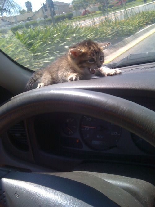 kattygirls:  Food On Your Dash :)  Poor kitty! Lol