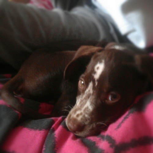 Our wee family is now complete :) say hello to Spot :-D <3 (Taken with Instagram)