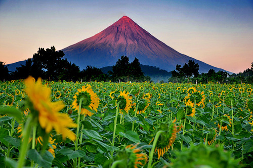 "tapio-ca:  ""Majestic Mt. Mayon"" by Darius Ypanto"