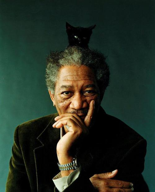 it's morgan freeman..with a cat on his head..AND WHAT!?!?!?